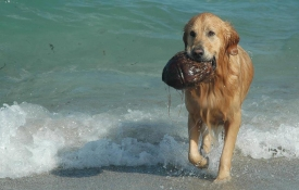 Three Great Dog Beaches in South Florida