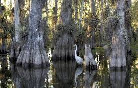 Two Options for Your Day Trip to the Everglades